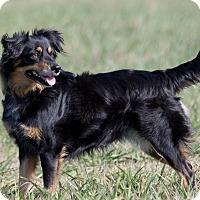 Adopt A Pet :: Jenny - Broken Arrow, OK