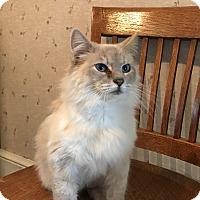 Adopt A Pet :: Fiona - Dalton, GA