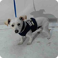 Adopt A Pet :: MAX - Orlando, FL