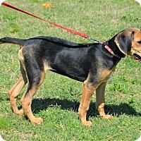Adopt A Pet :: Sillie Millie - Westport, CT