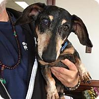 Adopt A Pet :: Nicki - San Francisco, CA