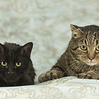 Adopt A Pet :: Mittens - Anchorage, AK