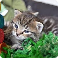 Adopt A Pet :: Felicity & Levi - Brooklyn, NY