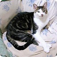 Adopt A Pet :: Georgia - Madison, TN