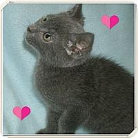 Adopt A Pet :: Petunia - Bradenton, FL