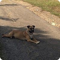 Adopt A Pet :: Phillip - Greenville, SC