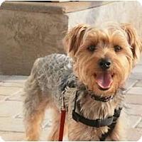 Adopt A Pet :: Maddie - Gulfport, FL