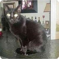 Adopt A Pet :: Ceatee - Summerville, SC