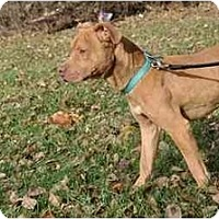 Adopt A Pet :: Dickens - Chicago, IL