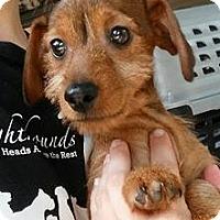 Adopt A Pet :: Alfalfa - Gainesville, FL