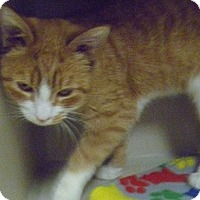 Adopt A Pet :: Chance - Hamburg, NY