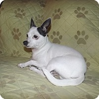 Adopt A Pet :: chico - Quincy, IN