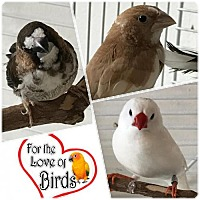Adopt A Pet :: Carmela, Brownie and Ivory Adoption Pending - Hightstown, NJ