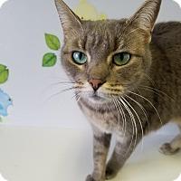 Adopt A Pet :: Penny - China, MI