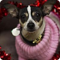 Adopt A Pet :: *Pumpkin Spice* - Philadelphia, PA