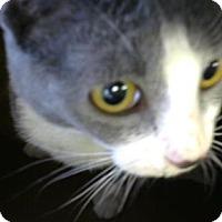 Adopt A Pet :: Mitsy - Philadelphia, PA