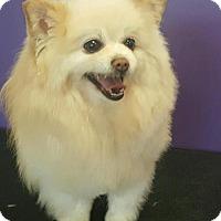 Adopt A Pet :: Peeka - Healdsburg, CA