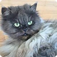 Adopt A Pet :: Owly - Davis, CA