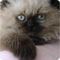 Adopt A Pet :: Truffles - Columbus, OH
