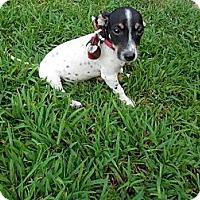 Adopt A Pet :: Scooter - Newark, DE