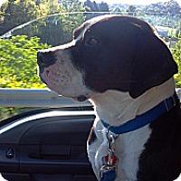 Adopt A Pet :: JOJO - Morgantown, WV