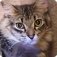 Adopt A Pet :: Silver Streak - Chicago, IL