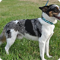 Adopt A Pet :: Sterling - Hagerstown, MD