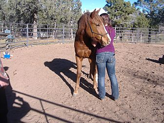 Quarterhorse/Draft Mix for adoption in Durango, Colorado - Sedona