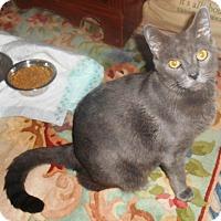 Adopt A Pet :: Taz - Parkton, NC