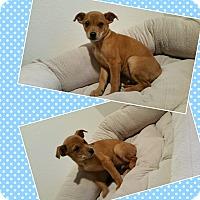 Adopt A Pet :: TJ - LAKEWOOD, CA