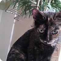 Adopt A Pet :: Sydney - Scottsdale, AZ