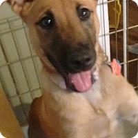 Adopt A Pet :: Misha - Bowie, MD
