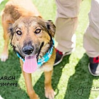 Adopt A Pet :: Amy March - Kansas City, MO