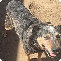 Adopt A Pet :: Richie - Cerritos, CA
