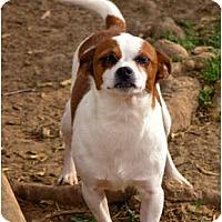 Adopt A Pet :: Joshi - Clarksville, TN