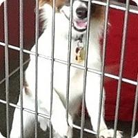 Adopt A Pet :: Gizmo- C - Lancaster, OH