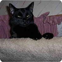 Adopt A Pet :: Uncle Yancey - Warren, OH
