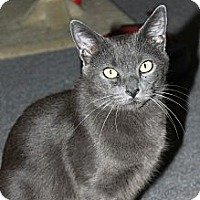 Adopt A Pet :: Harper (JT) - Little Falls, NJ