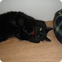 Adopt A Pet :: AC - Milwaukee, WI