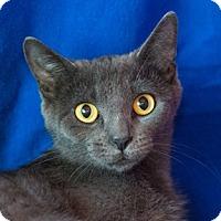 Adopt A Pet :: Amarra - Calgary, AB