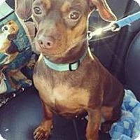 Adopt A Pet :: Kitana - Hanover, PA