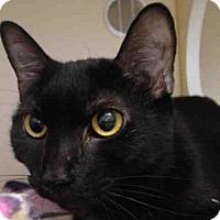 Adopt A Pet :: DAHLIA - Pittsburgh, PA