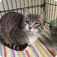 Adopt A Pet :: Prince - Holland, MI