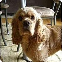 Adopt A Pet :: Sunny - Tacoma, WA