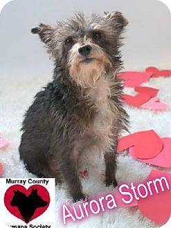 Terrier (Unknown Type, Medium) Mix Dog for adoption in Crandall, Georgia - Aurora Storm