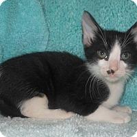 Adopt A Pet :: Spot - Reston, VA