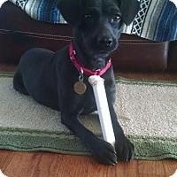 Adopt A Pet :: Stevie Nicks - Richmond, VA