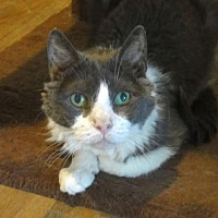Adopt A Pet :: Carl - Penndel, PA