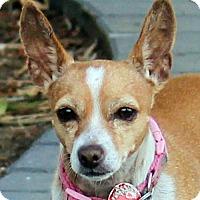 Adopt A Pet :: Nena - Antioch, CA