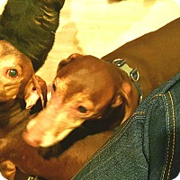 Adopt A Pet :: Charlie and Brown - Andalusia, PA